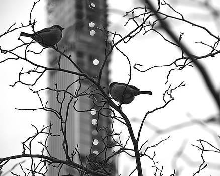 Corinne Rhode - Sitting in a Tree