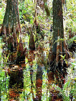 Sharon Williams Eng - Six Mile Cypress Reflections