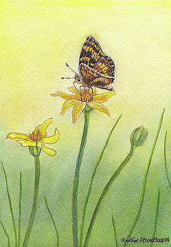 Skipper Butterfly by Heather Stinnett