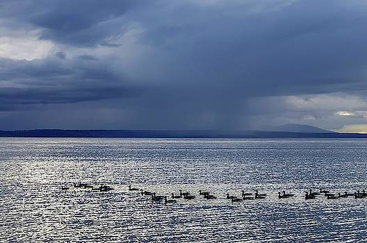 Tom Trimbath - Skirting The Storm