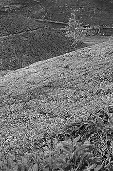 SKN 9118 Down The Slope. B/W by Sunil Kapadia