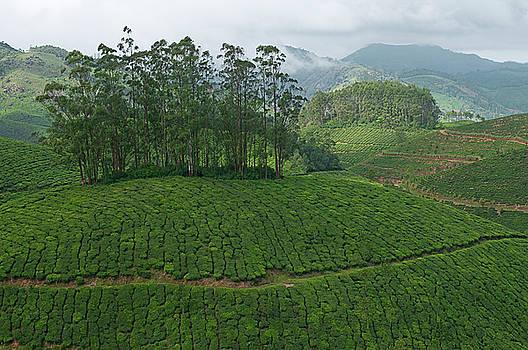 SKN 9119 Tea Mountains. Color by Sunil Kapadia
