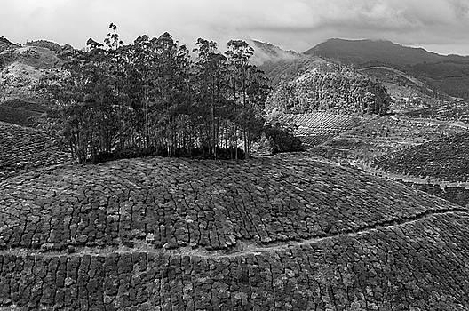 SKN 9119 Tea Mountains. B/W by Sunil Kapadia