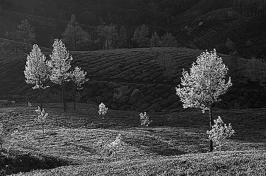 SKN 9164 Playground of Trees. B/W by Sunil Kapadia