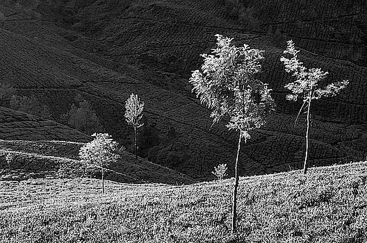 SKN 9166 Portrait of Trees. B/W by Sunil Kapadia