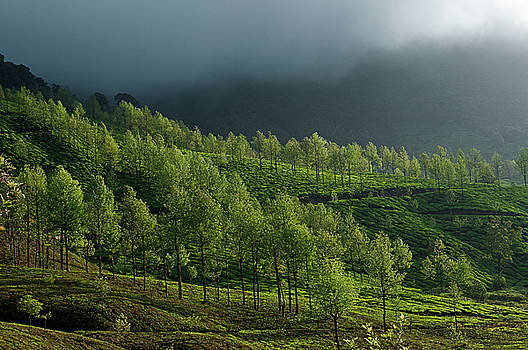 SKN 9172 United Nature by Sunil Kapadia