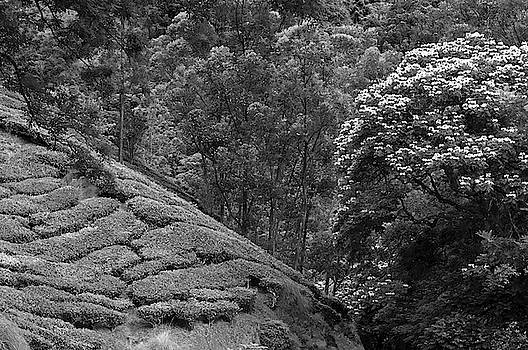 SKN 9187 Nurturing Nature B/W by Sunil Kapadia
