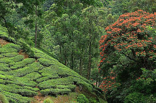 SKN 9187 Nurturing Nature by Sunil Kapadia