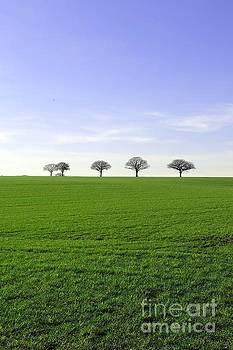 Sky, Trees, Field by John Chatterley