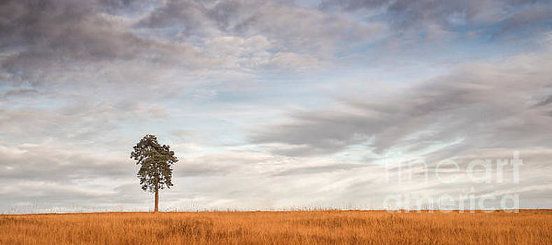 Skyline pine by Colin Roberts
