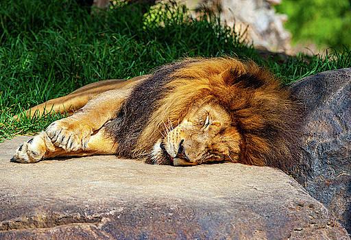 Sleeping King by Anthony Jones