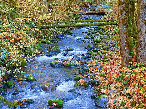 Slope By Slope Gently Flowing In The Forest by Art Sandi