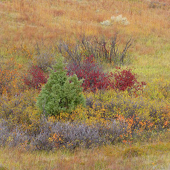 Slope County Autumn Bounty by Cris Fulton