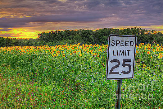Larry Braun - Slow Down, Smell the Sunflowers