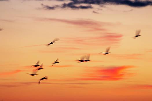 Slow Mo Flight by Sharon Mayhak