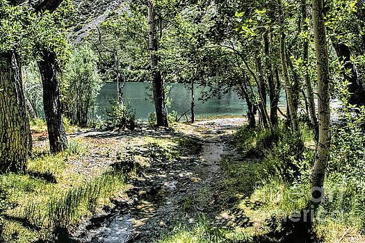 Small Creek  by Joe Lach