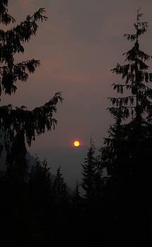 Smoky Sun by Traci Asaurus
