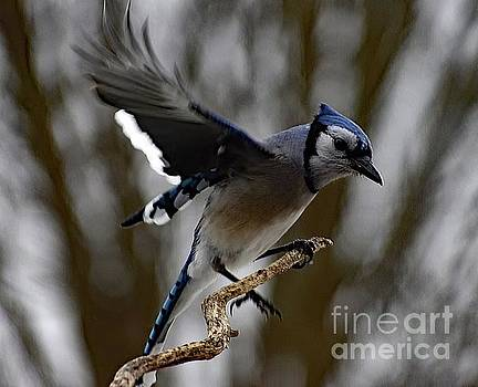 Cindy Treger - Smooth Landing - Blue Jay