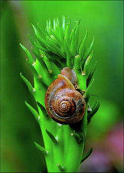 Snail on Cactus by Constance Lowery