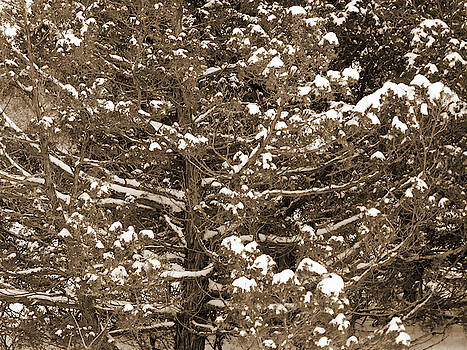 Snow and Branches by Cris Fulton