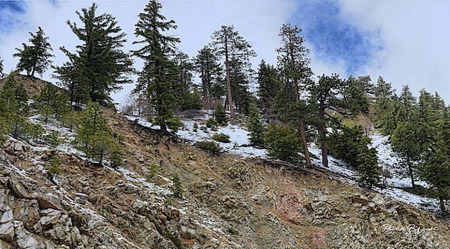 Snow and Rocks and Pines by Paulette B Wright