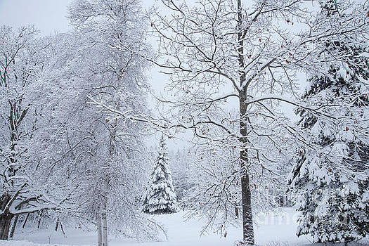 Snow Covered by Alana Ranney