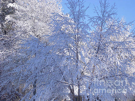 Snow Covered Branches by Angela Stafford