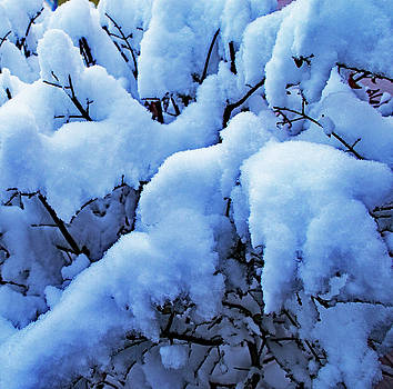 Snow Covered Bush by Richard Risely