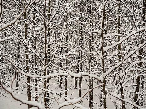 Louis Dallara - Snow Covered Trees