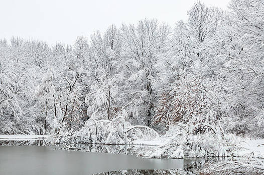 Snow Covered Trees by Terri Morris