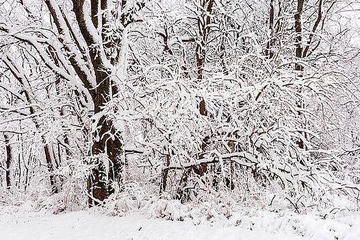 Snow Covers the Trees by Terri Morris