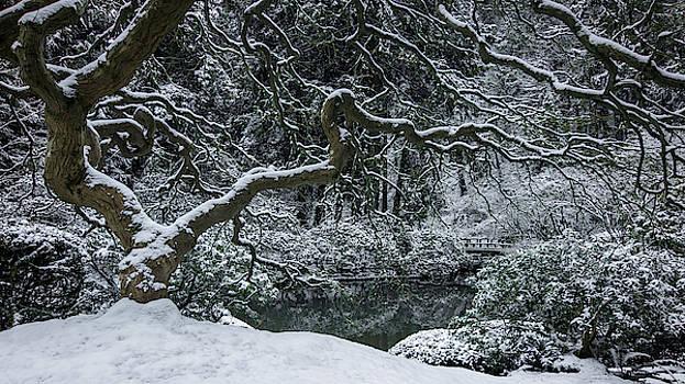 Snow-Dappled Garden by Don Schwartz