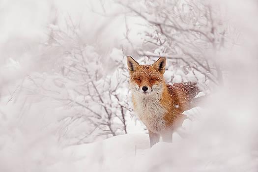 Snow Fox Series - A Fairytale Fox in a Dreamscape by Roeselien Raimond