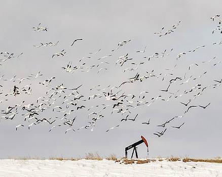 Rob Graham - Snow Geese over Oil Pump 01
