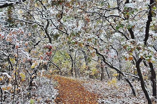 Snow Greets Autumn by Diane Alexander