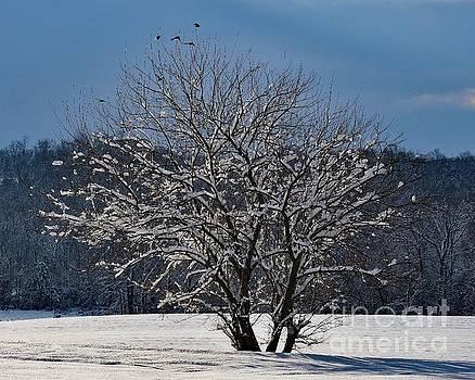 Cindy Treger - Snow Laden Tree
