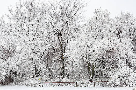 Snow Laden Trees by Terri Morris