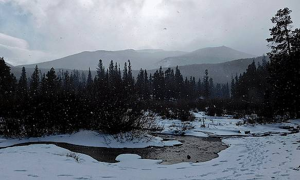 Snow Squall by Dan Miller