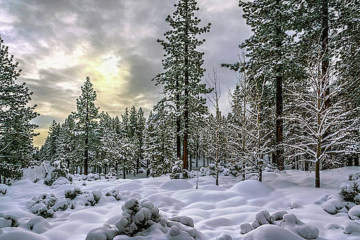 Snow Waves by Maria Coulson