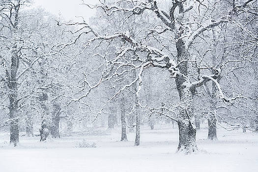 Snowfall in the Oak Tree Pasture by Ludwig Riml