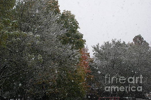 Frank J Casella - Snowing on a Fall Day