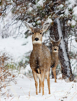 Steve Krull - Snowstorm Deer Partners