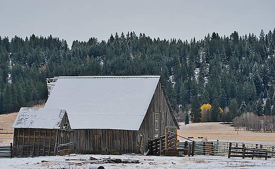 Snowy Barn Yellow Tree by Tom Gresham