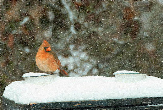Snowy Cardinal by Diane Lindon Coy
