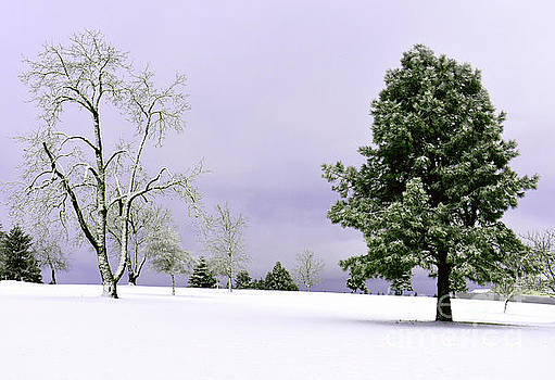 Snowy Day by Ellie Asha Photography