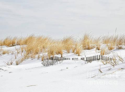 Snowy Dunes by Diane LaPreta