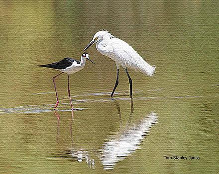Snowy Egret And Black Neck Stilt Look For Food by Tom Janca
