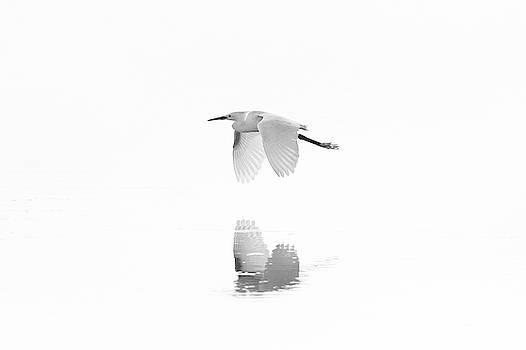 Snowy Egret Reflections by Jesse MacDonald