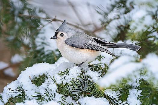 Snowy Footing by Peg Runyan