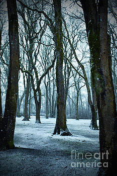 Snowy forest by Ellie Asha Photography